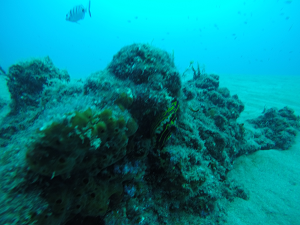 diving the house reef in lanzarote
